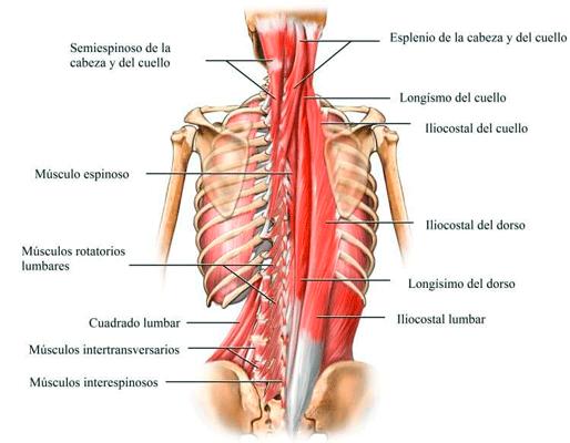 la vocalizacion y la espalda